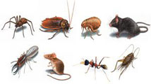Anti Pest, Commercial Pest Control, Outdoor Pest Control, malaysia